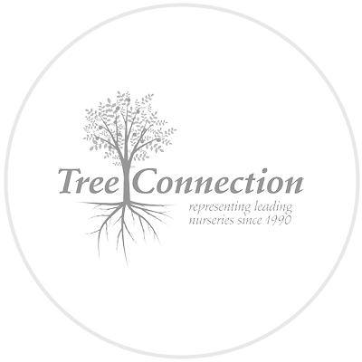 Tree Connection